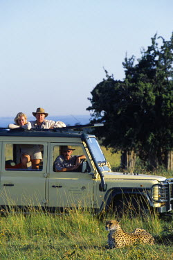 KEN2690 Watching a cheetah on a game drive in the Masai Mara.