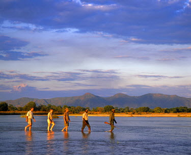 ZAM4172 Zambia, South Luangwa National Park.  Tourists on a walking safari wade the Kapamba River.
