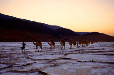 DJI1012 An Afar camel caravan leaves Lake Assal at daybreak. At 509 feet below sea level, Lake Assal is the lowest place in Africa. Nomadic Afar tribesmen come here regularly with their camels to collect sal...