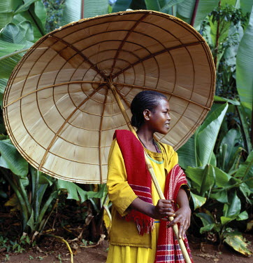 An attractive girl from the Kediyo tribe carries a large, beautifully made umbrella. Its wooden frame is covered with the dried leaves of ensete, the false banana plant (seen growing in the background...