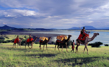 KEN4623 Maasai men lead a camel caravan laden with equipment for a 'fly camp' (a small temporary camp) close to Lake Magadi in beautiful late afternoon sunlight.