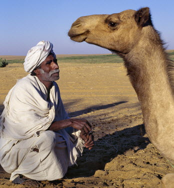 SUD1135 A Nubian man and his camel at an oasis in the Nubian Desert north of Old Dongola.