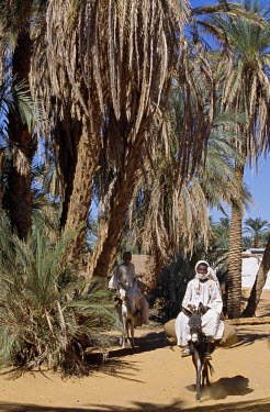 SUD1140 Youth on donkeys pass beneath date palms at Old Dongola.