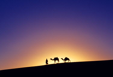 A Berber tribesman is silhouetted as he leads his two camels along the top of sand dune in the Erg Chegaga, in the Sahara region of Morocco. (MR)