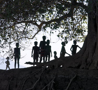 ETH2093 In the late afternoon, a group of Dassanech children walk in single file beneath a large wild fig tree along a bank of the Omo River in Southwest Ethiopia. The Dassanech speak a language of Eastern C...