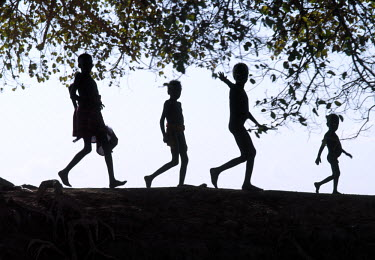 ETH2094 In the late afternoon, a group of Dassanech children walk in single file beneath a large wild fig tree along a bank of the Omo River in Southwest Ethiopia. The Dassanech speak a language of Eastern C...