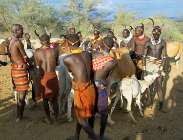 ETH2262 Hamar men line up steers at a 'Jumping of the Bull' ceremony. The semi-nomadic Hamar of Southwest Ethiopia embrace an age-grade system that includes several rites of passage for young men. The most e...