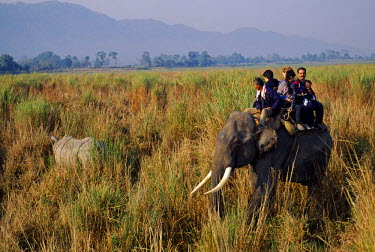 IND5604 Tourists on elephant back viewing the one horned rhino in Kaziranga National Park. Located on the banks of the Brahmaputra River in the far North East of India, Kaziranga National Park covers an area...