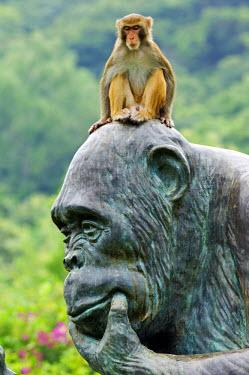 CH2070 China, Hainan Province, Hainan Island, Monkey Island Research park - a gorilla statue.