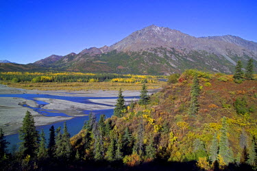 USA7584 USA, Alaska. Autumn colours blaze in the tundra along the Nenana River. Looking towards Broad Pass from a point between Cantwell and Denali Park. Orange bushes are Dwarf Birch (Betula nana). Yellow bu...