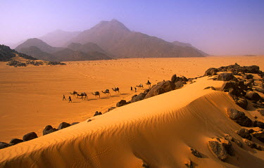 NIG1352 Niger, Tenere Desert. Camel Caravan travelling through the Air Mountains & Tenere Desert. This is the largest protected area in Africa, covering over 7.7 million hectares. It includes the volcanic mas...