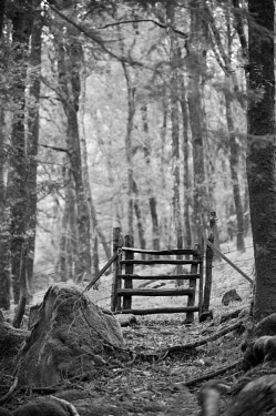 WAL6844 Wales, Conwy, Snowdonia.  A rustic gate across a path through the forest at Nantgywnant at the bottom of the  Watkin Path one of the routes up Snowdon.