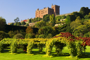 Wales; Powys; Welshpool. Powis Castle looks out over specatcalar gardens including this vine arch in the Formal Garden