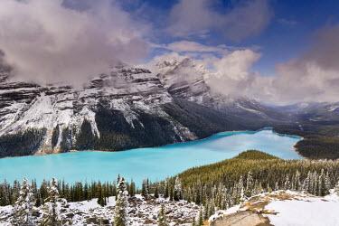 CA08098 Peyto Lake, coloured by glacial silt, Banff-Jasper National Parks, Canada