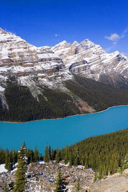 CA08106 Peyto Lake, coloured by glacial silt, Banff-Jasper National Parks, Canada