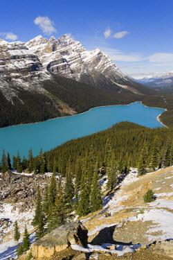 CA08107 Peyto Lake, coloured by glacial silt, Banff-Jasper National Parks, Canada