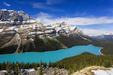 CA08108 Peyto Lake, coloured by glacial silt, Banff-Jasper National Parks, Canada