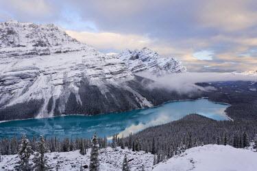 CA08135 Peyto Lake, coloured by glacial silt, Banff-Jasper National Parks, Alberta, Canada