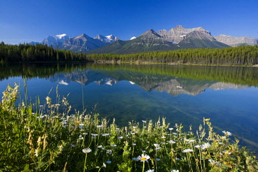 CA08180 Bow Mountain Range and Herbert Lake, Banff National Park, Alberta, Canada