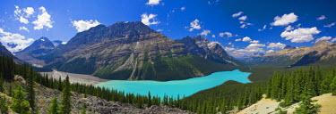 CA08192 Peyto Lake, Icefields Parkway, Alberta, Canada