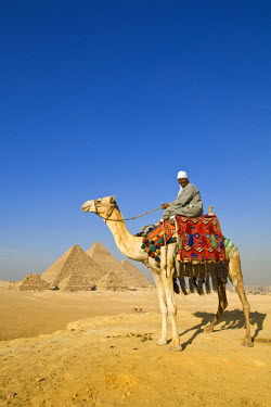 EG01213 Camel & driver at the Pyramids, Giza, Cairo, Egypt