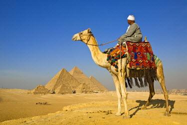 EG01214 Camel & driver at the Pyramids, Giza, Cairo, Egypt