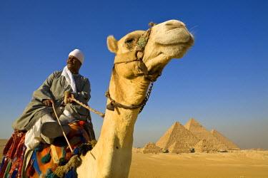 EG01215 Camel & driver at the Pyramids, Giza, Cairo, Egypt