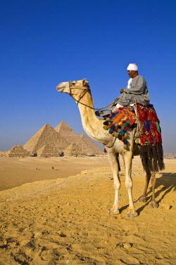 EG01216 Camel & driver at the Pyramids, Giza, Cairo, Egypt