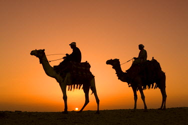 EG01221 Camels near the Pyramids at Giza, Cairo, Egypt