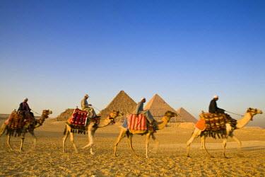 EG01229 Camels at the Pyramids, Giza, Cairo, Egypt