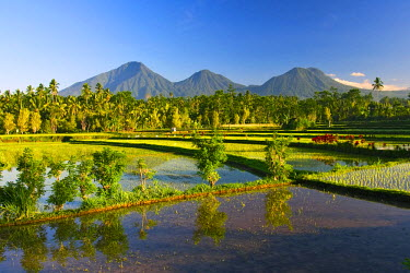 ID01072 Paddy fields & volcanos at Sidemen, Bali, Indonesia
