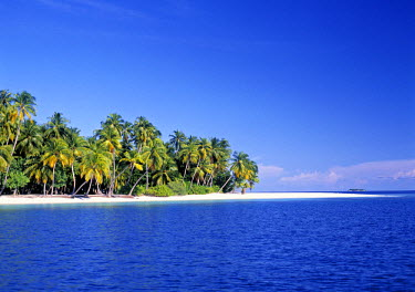 Palm trees and beach, Maldives