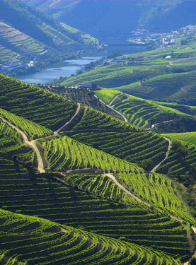 PT05087 River Douro, Douro Region, Northern Portugal