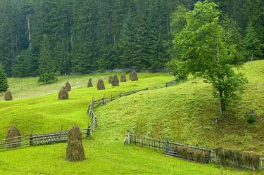 RM01061 Haystacks, Bucovina, Romania