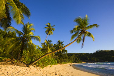 SC01087 Seychelles, Mahe Island, Anse Takamaka beach, palm