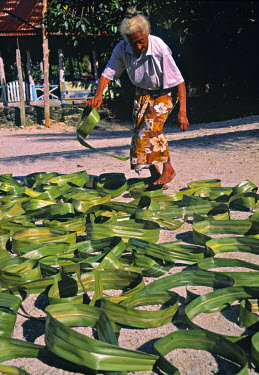 SM01008 Pandanus leaves being dried, Samoa