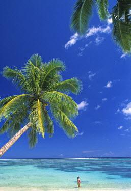 SM01018 Return to Paradise Beach, Upolu Island, Samoa