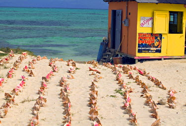 TC01007 Conch Shells, Turks & Caicos, Caribbean