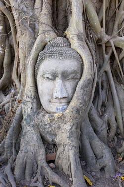 TH03208 Buddha head, Wat Phra Mahathat, Ayutthaya, Thailand