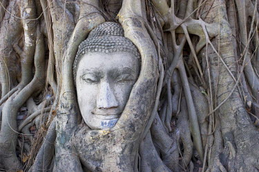 TH03209 Buddha head, Wat Phra Mahathat, Ayutthaya, Thailand