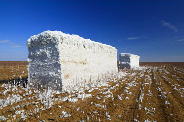 US13044 Picked Cotton in large Bale, Panhandle area, Texas, USA