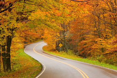 US26034 Road in forest, Vermont, New England, USA