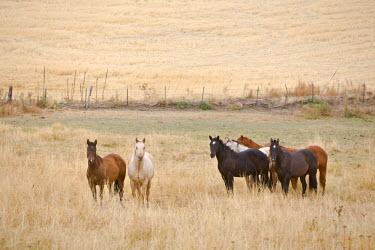 US33015 Horses, Idaho, USA