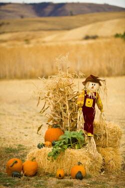 US33016 Scarecrow & pumpkins, Idaho, USA