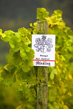 DE05029 Vineyard Sign, Bacharach, Rhine Valley, Germany