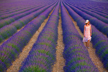FR02510 Young Woman in Lavender Field near Valensole, Provence-Alpes-Cote d'Azur, France, MR