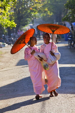 MYA1315 Myanmar, Burma, Sittwe. Buddhist nuns with traditional bamboo-framed orange umbrellas walk through the streets of Sittwe.