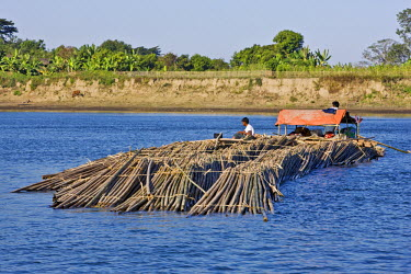 MYA1380 Myanmar, Burma, Lay Mro River. Floating bamboo down the Lay Myo River.