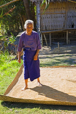 MYA1410 Myanmar, Burma, Rakhine State, Laung Shein. An old woman at Laung Shein village uses her feet to spread rice onto a bamboo mat for drying in the sun.