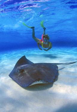 CA42_GJO0101_M Stingray City, Grand Cayman, Cayman Islands, Caribbean.MR